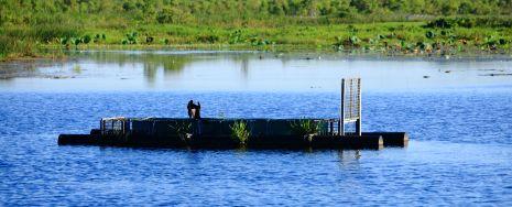 Crocodile trap at Fogg Dam