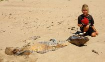 Dead crocodile on the beach