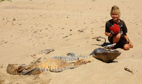 Dead crocodile on the beach