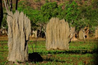 Magnetic termite mound