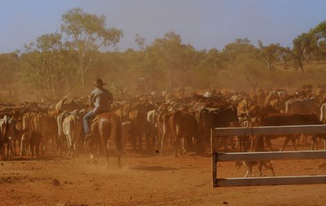 Mustering in progress