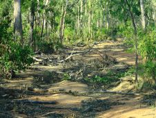 The road to Goanna Lagoon