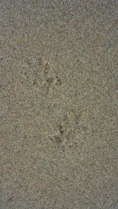 Unknown tracks