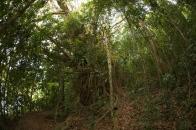 Lake Eacham forest