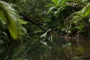 Lacey Creek
