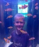 Oscar and Anemone fish (Nemos)