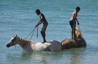 Cooling off the horses