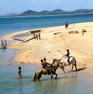 Horses at Seisia jetty