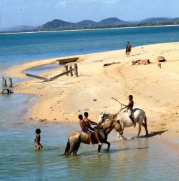 Horses at Seisia jetty