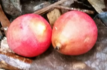 Forest fruit