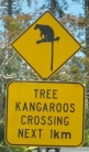 Yes, kangaroos in trees