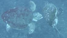 Turtles chasing
