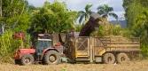 Sugar cane harvesting
