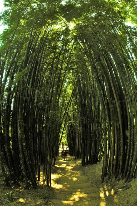 Bamboo corridor