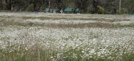 Spring flowers around Ebor