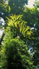 Rainforest at Dorrigo National Park