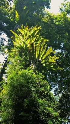 Rainforest at Dorrigo National Park