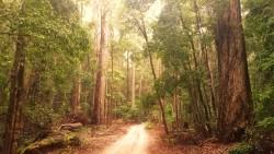 Forest track on Fraser Island