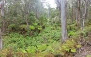 Forest walk at Werrikimbe