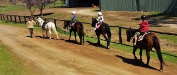 The horses head off