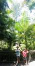 The Grandis Tree