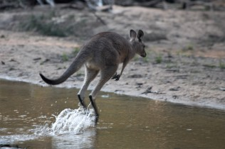 A local crossing the river